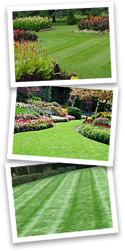 icon-lawn-maintenance-grass-edging-trimming-mulching
